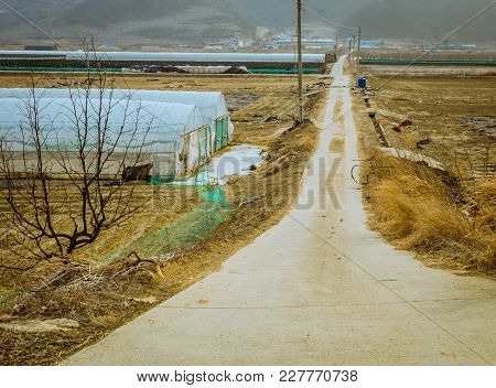 Landscape Of Narrow Road Leading Through Field With Growing Houses Covered With Translucent Plastic