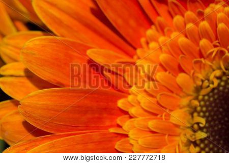 Beautiful Colorful Natural Spring Flowers In Macro View