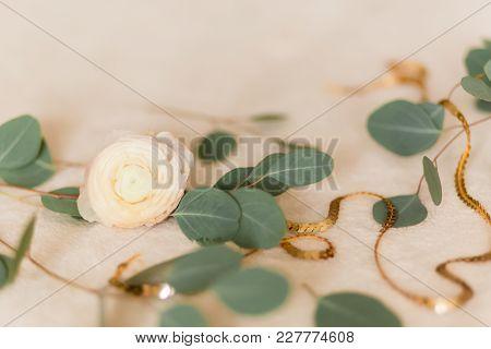 Flower Ranunculus With Eucalyptus