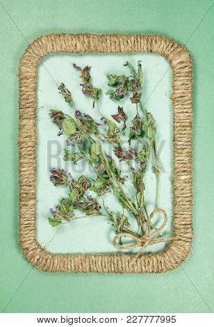 Herbarium. Glechoma Hederacea. Dry Plants In Framework Made Of Jute Thread. Scrapbooking. Dried Flow