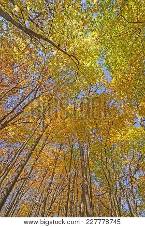 Colorful Forest Canopy In The Fall In Great River Bluffs State Park In Minnesota