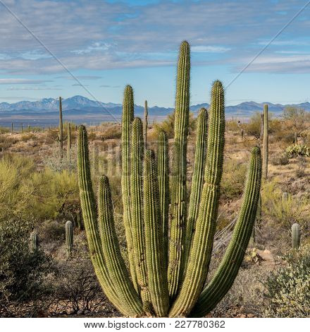 Desert Landscape In Tucson Arizona With Saguaro Cactus
