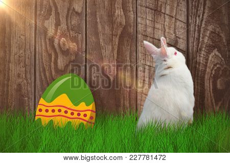 Rear view of cute rabbit against wood panelling