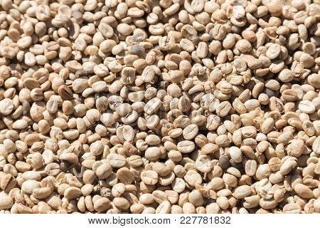 Coffee Beans Closeup Background. Green Unroasted Coffee Beans.