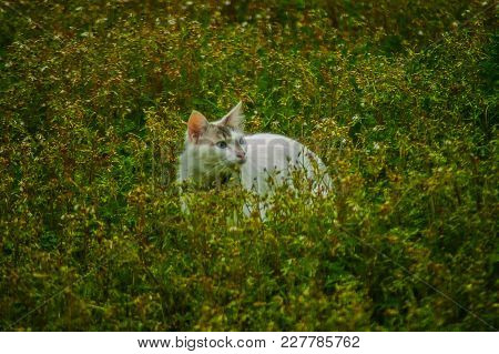 Kitty Cat In The Weeds Looking For Food