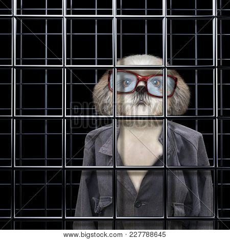 Dirty Dog Is Punishe In Cage Of Prison