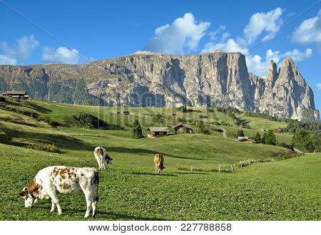 Landscape On Seiser Alm With Famous Schlern Mountain In Background,south Tirol,trentino,alto Adige,i