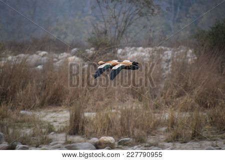 Two Birds Are Jointly Flying In Jungle