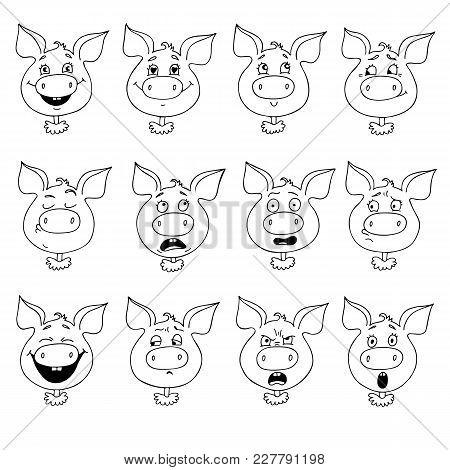 Set Of Pig's Emotions