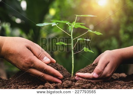 Father And Children Helping Planting Young Tree In Garden