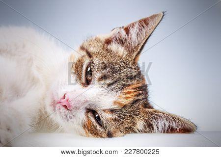 Portrait Of Non-pedigree Little Kitten With Big Eyes