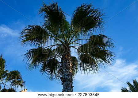 Palms Trees Branches. Summertime. Green Palms Trees On The Blue Sky Background.