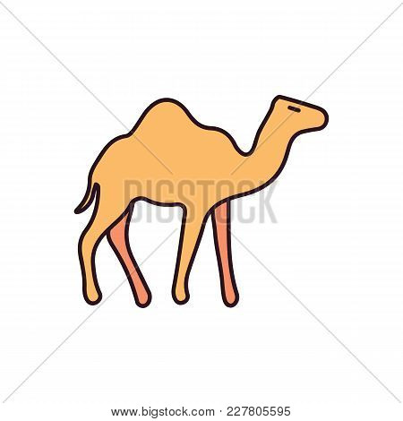 Egyptian Camel Icon In Cartoon Style. Egypt Camel Object Vector Illustration Isolated On White Backg