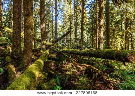 Subtropical Forest With A Windbreak And Fallen Trees, Covered With Green Moss, Fern And Other Plants