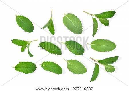 Fresh Mint Leaf Isolated On White Background, Flat Lay, Top View