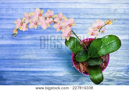 Orchid And Decorative Leaves On A White Wooden Table, Top View. Beautiful Background For Your Design