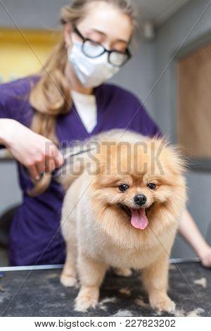 Grooming Dog Haircut