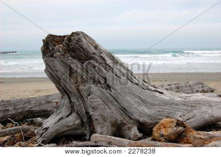 Old Tree Stump On The Beach