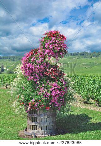 Vineyard Landscape Of Oger Near Epernay In Champagne Region,france