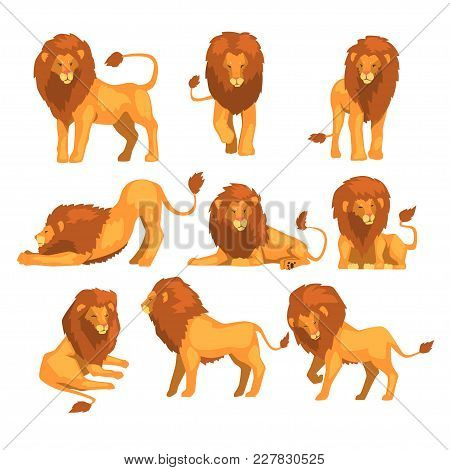 Proud Powerful Lion Character In Different Actions Set Of Cartoon Vector Illustrations Isolated On A