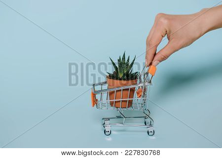 Cropped Shot Of Human Hand Holding Small Shopping Cart With Green Aloe Plant On Grey