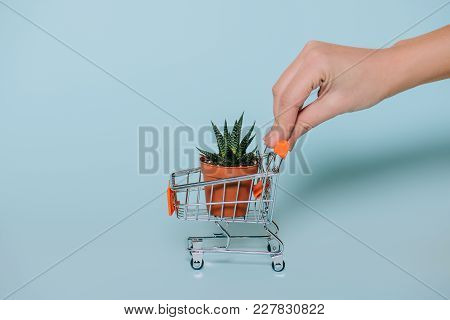 Close-up Partial View Of Human Hand Holding Shopping Trolley With Succulent In Pot On Grey