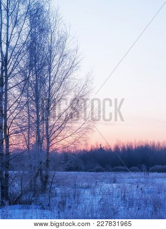 Frosty Winter Morning And Frosty Silver Birches On The Foreground