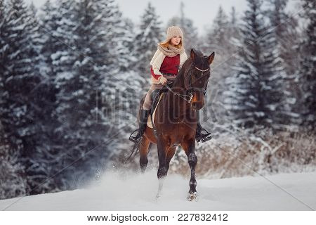 Close-up Of Horse With Rider Is Walking Around Field In Winter Forest. Walking Through Farm, Grazing