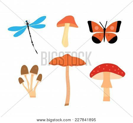 A Set Of Four Species Of Fungi And Two Insects. A Dragonfly And A Butterfly. Types Of Mushrooms. Hon