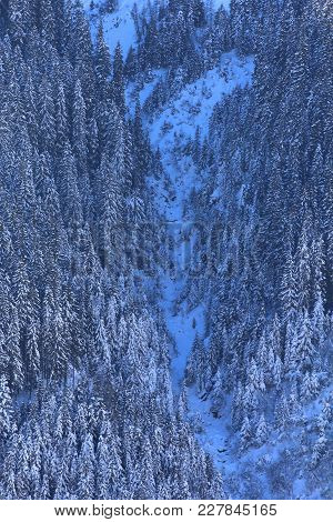 Wintery Wonderland With Sunshine And Forrest In Austria