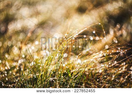 Frost Grass After A Cold Night In Winter A