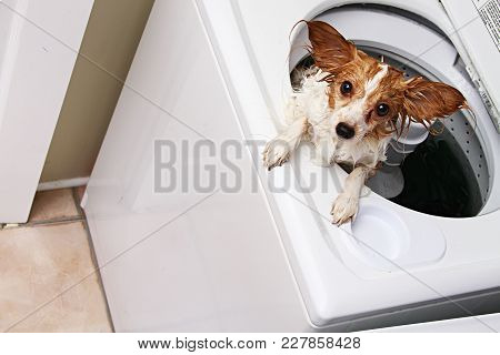 A Dog In A Washing Machine Concept.