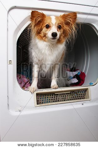 A Dog Getting Dry In A Dryer.