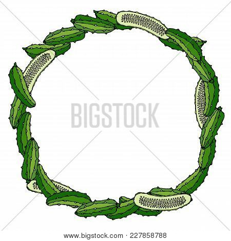 Wreath Or Round Frame With Green Cucumbers Or Gherkin And Half Of Cucumbers. Fresh Ripe Vegetable. H