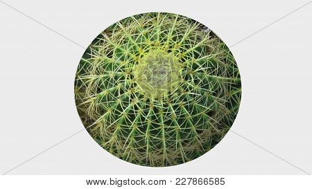 Prickly Pin Cushion Cactus Swirl Texture Round Background
