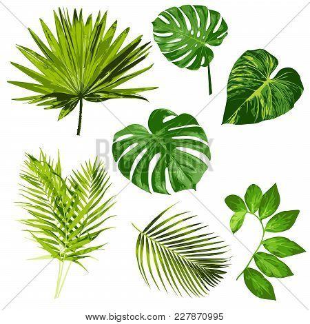 Tropical Leaves Vector Herbal Clipart Digital Art Set Of 7 Imagestropical Leaves Vector Herbal Clipa