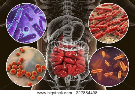 Intestinal Microbiome, Bacteria Colonizing Different Parts Of Digestive System, Bifidobacterium, Lac