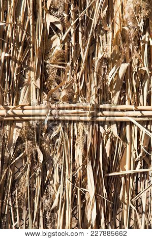 Background Of Reed Fence . Photo Of An Abstract Texture