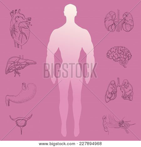Human Silhouette In The Middle Of Hand Drawn Human Organs. Human Anatomy Representation For Various