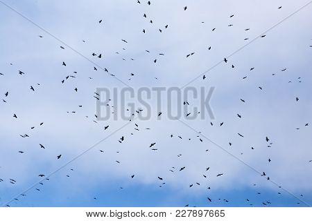 A Flock Of Raven Birds On A Blue Sky . .