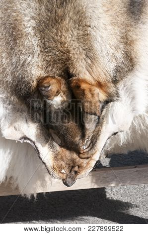 Close Up Fluffy Hair Skin Of Dog. Animal Skin Concept And Background.