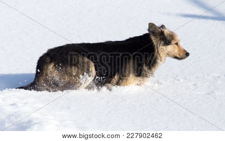Dog In The Snow In The Winter .