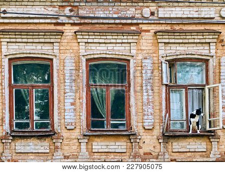 Big dog sitting on the windowsill in the old historical building, looking outside one of the three wooden windows ready to runaway poster