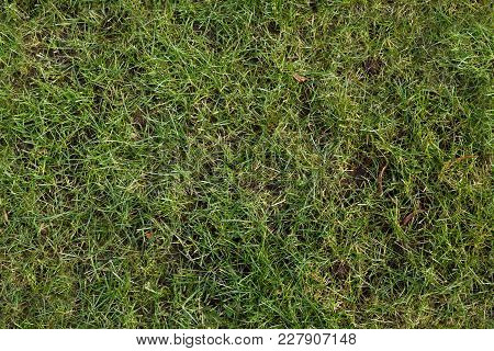 Green Lawn After The Winter As A Seamless Pattern, Spring Garden Background Texture