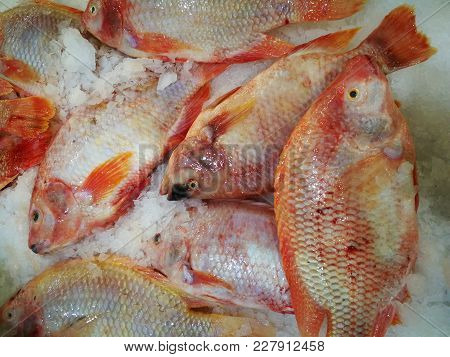 Red Tilapia/ruby Fish In Market,shelves Selling Ruby Fish In The Market,fresh Pink Frozen Pomegranat