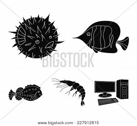Shrimp, Fish, Hedgehog And Other Species.sea Animals Set Collection Icons In Black Style Vector Symb