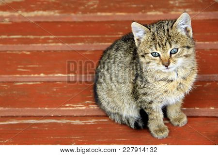 Kitten Sits On Bench. Young Grey Cat Sitting On The Surface. Beautiful Little Cat
