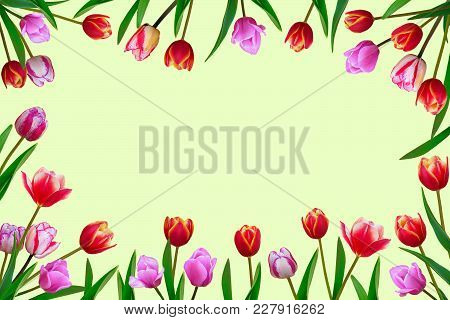 Bouquet Of Spring Fresh Flowers, Tulips With Multi-colored Petals.