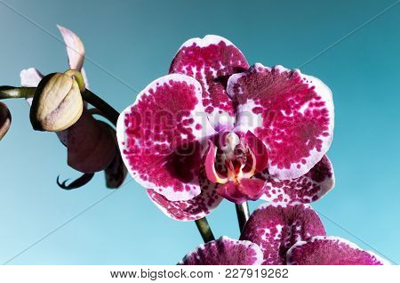 A Purple And White Orchid On A Greenish Background