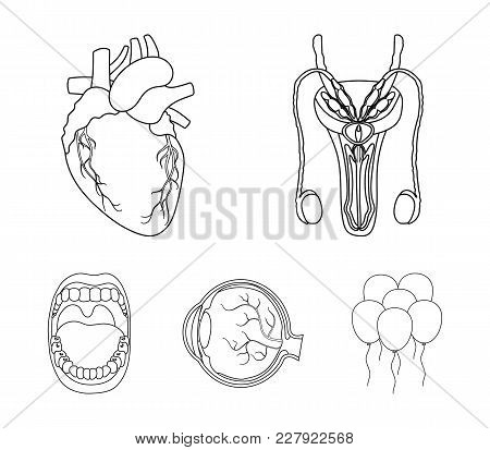Male System, Heart, Eyeball, Oral Cavity. Organs Set Collection Icons In Outline Style Vector Symbol
